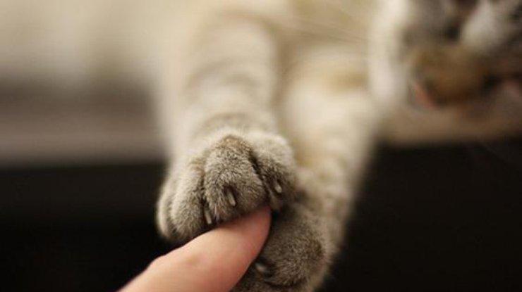 Кот сярко выраженными большими пальцами напугал пользователей сети