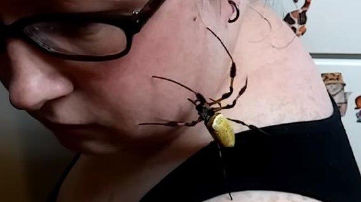Налицо американки заполз большой паук-золотопряд