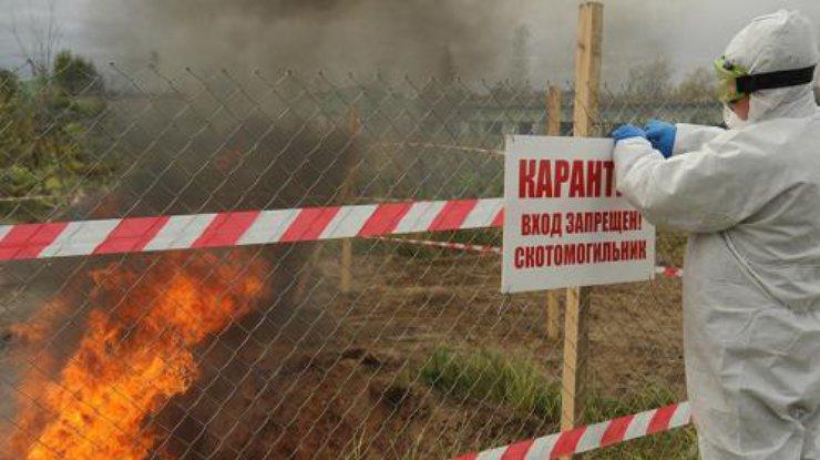 ВХарьковской области— новая вспышка АЧС