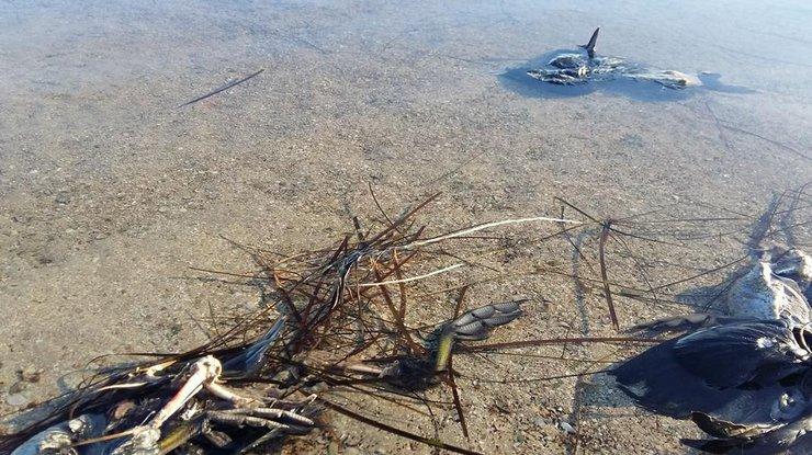 Награнице сКрымом начали массово гибнуть дикие птицы