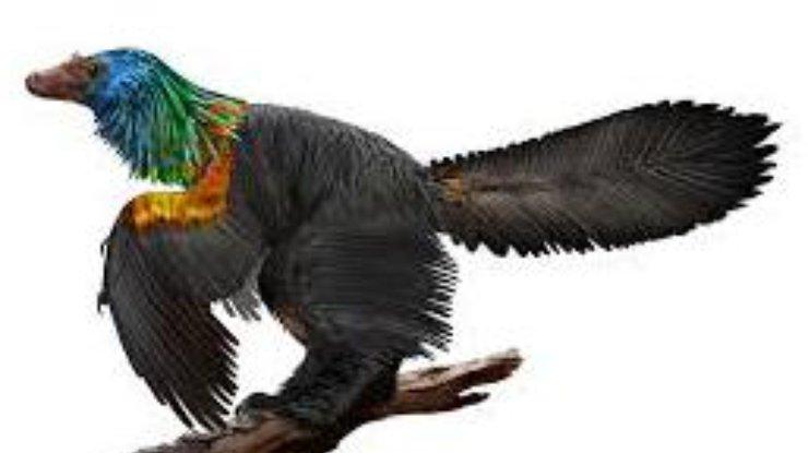 Ученые обнаружили новый вид динозавров срадужным оперением