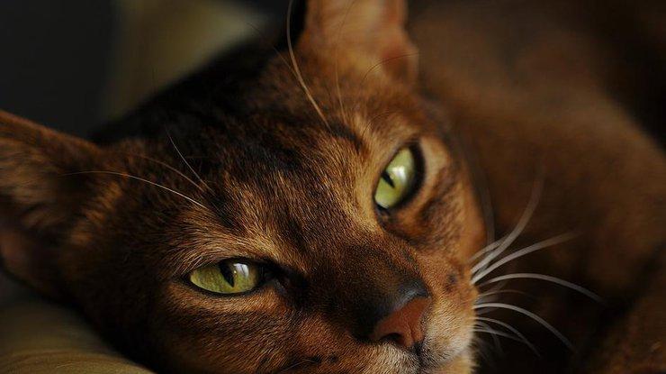 ВИталии кот получил внаследство 30 тыс. евро