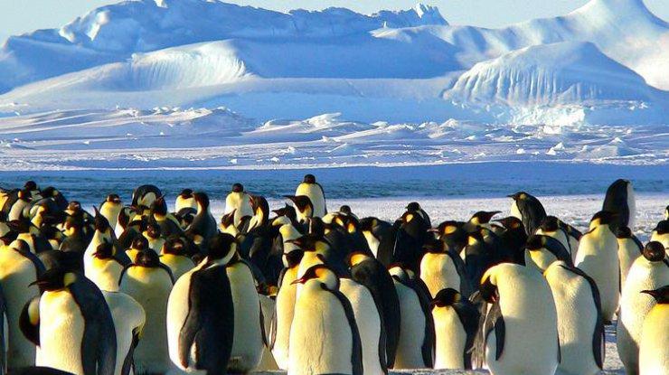 Документалисты поступились принципами испасли пингвинов вАнтарктиде