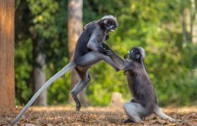 Фото: Comedy Wildlife Photography Awards