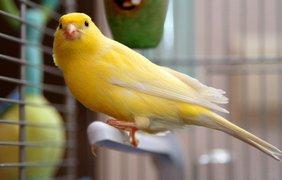 Фото: vokrugsveta.ua / Китай - певчие птицы