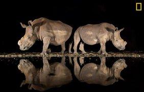 Фото: National Geographic