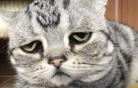 Печальная кошка