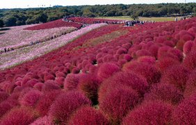 Национальный парк Хитачи, Япония. Фото flickr.com/shin--k