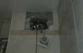 Фото: Kyiv Animal Rescue Group