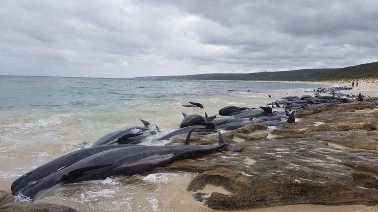 Два человека погибли при крушении вертолета вАвстралии