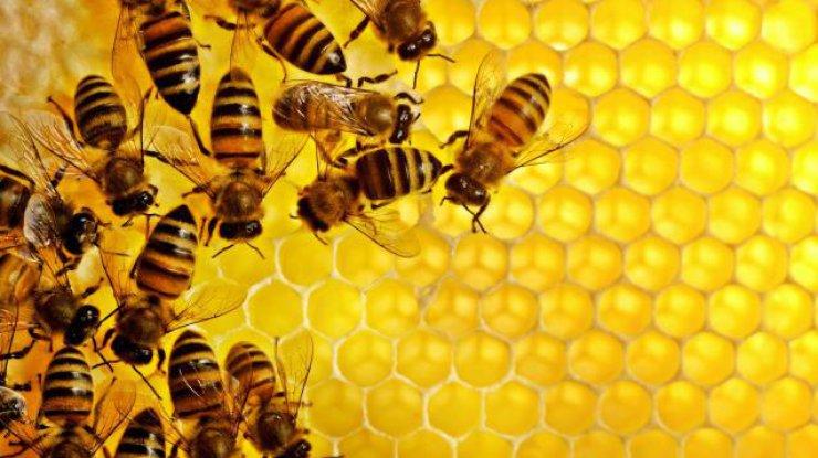 EC одобрил запрет напестициды, убивающие пчел