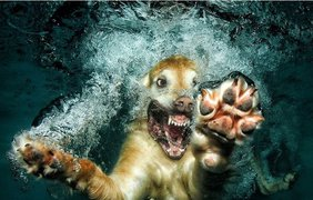 Фото: социальные сети / Собака, нырнувшая за мячиком
