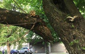 В центре Киева на авто упало дерево