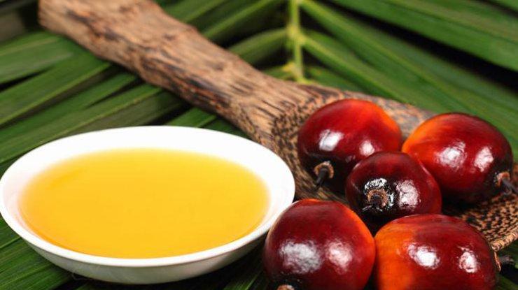 Верховная Рада предлагает запретить использование пальмового масла для производства пищевых продуктов