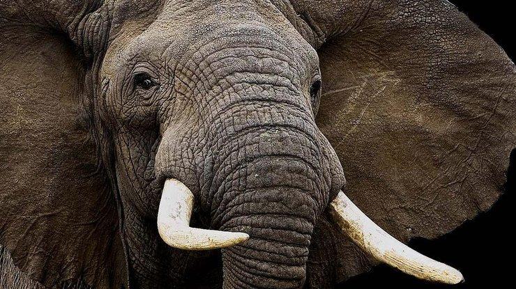 Слон вовремя представления вцирке рухнул на созерцателей