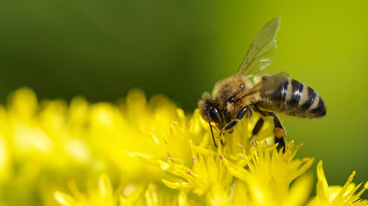 Без насекомых мир изменится.