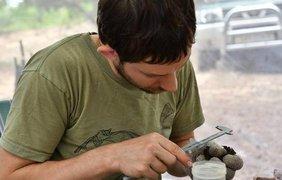 За время экспедиции ученым удалось поймать 420 особей. Фото: liga.net