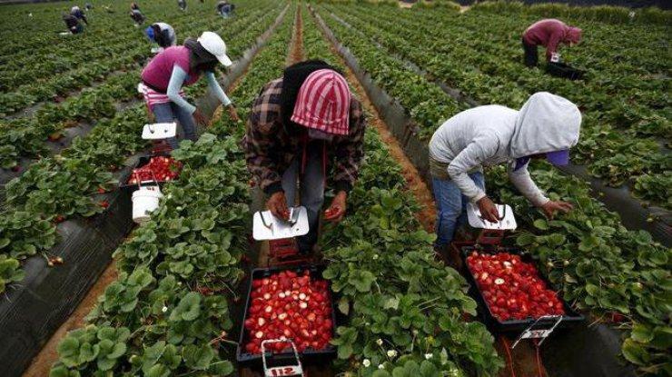 ВУкраине из-за трудовой миграции может ускориться рост цен