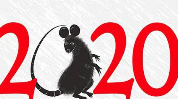 Фото: год белой крысы 2020