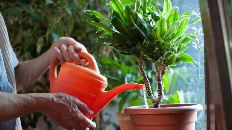 Почему гибнут комнатные растения / Фото: prozvety.ru