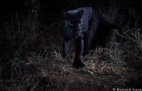 Фото: BBC/BURRARD-LUCAS PHOTOGRAPHY