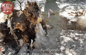 В центре Киева огромное дерево упало на женщину