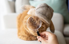 супруги делают забавные шапки из котов