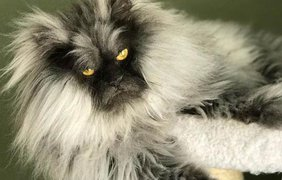 Кошка Юнона / Фото: Instagram