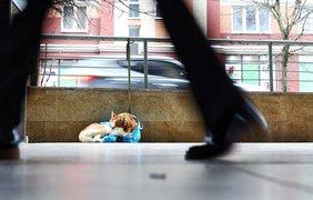 Хаски/ Фото: klops.ru