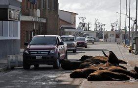В Аргентине на пустые улицы вышли морские львы/ Фото: lanacion.com.ar