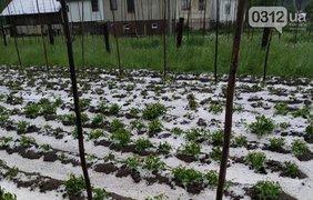 Град весной на Закарпатье / Фото: сайт города Ужгорода