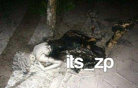 В Запорожье нашли сожженный труп девушки/ Фото: verge.zp.ua