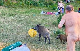 Погоня за кабаном / Фото: facebook.com/alandauer