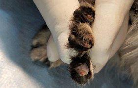 Пострадавший котенок / Фото: en-media.tv