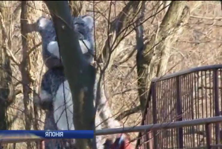 З зоопарку в Японії втікав співробітник у костюмі барса (відео)