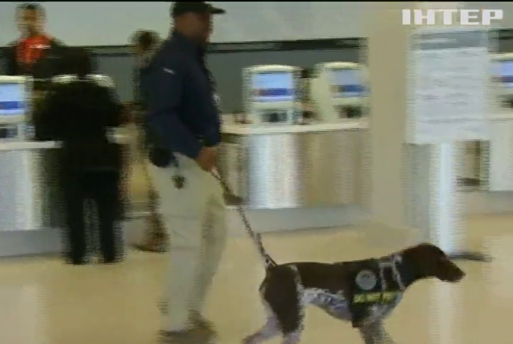 Аеропорти США беруть на роботу собак
