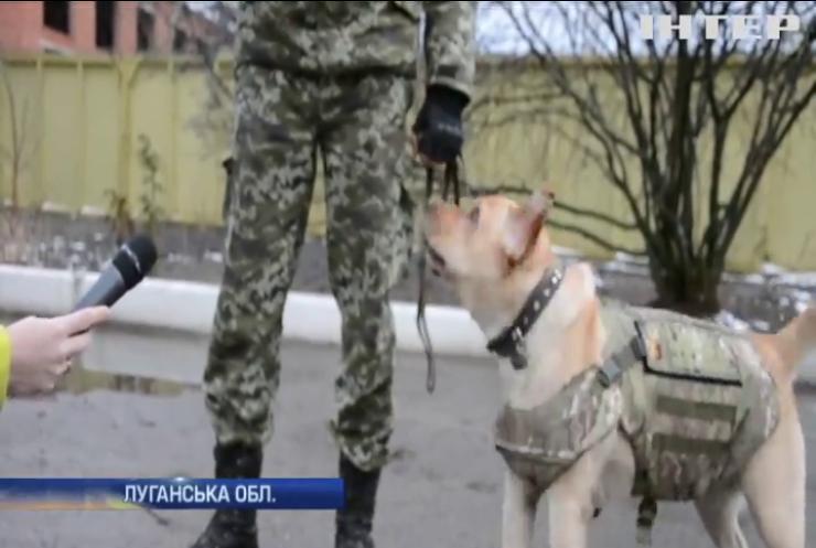 Собак-прикордонників одягнуть в бронежилети