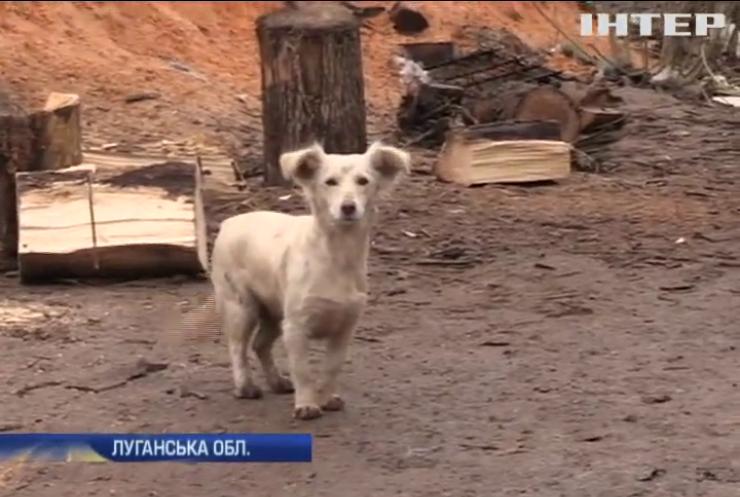 Військових під Попасною собаки рятують від обстрілів