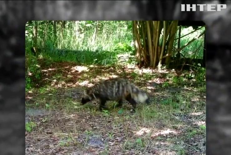Чорнобильску зону заполонили рідкісні тварини