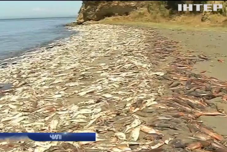 У Чилі на берег викинулися тисячі кальмарів
