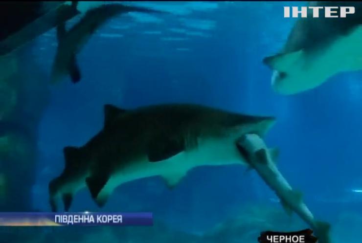У Кореї акула з'їла конкурента на очах у туристів (відео)