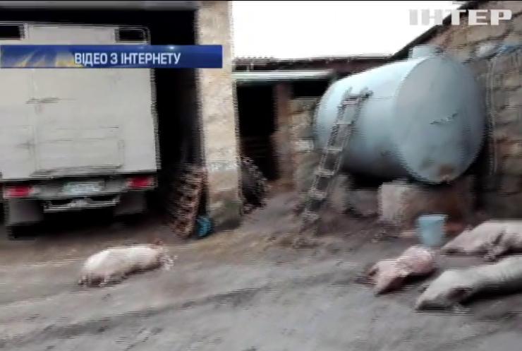 Росія заборонила ввезення м'яса з Криму