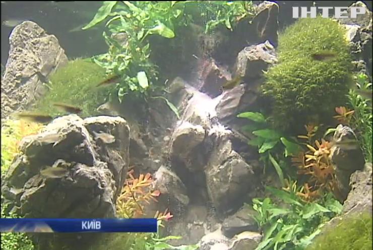 Найкращим акваріумістом України визнали іванофранківця