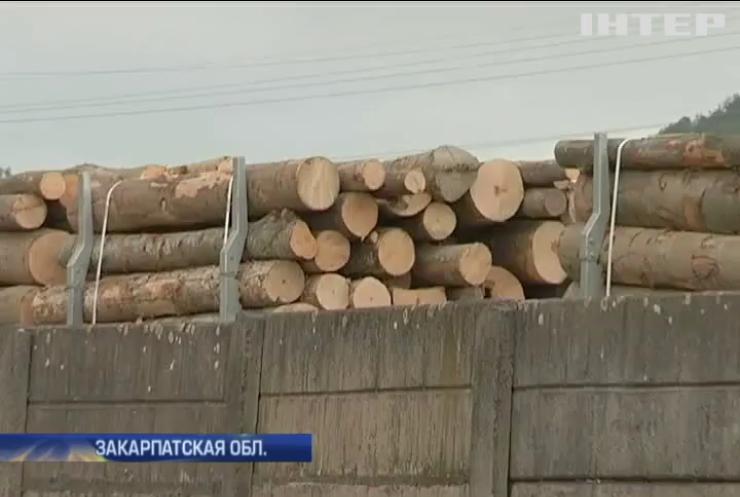 Активисты на Закарпатье перехватили 20 вагонов леса