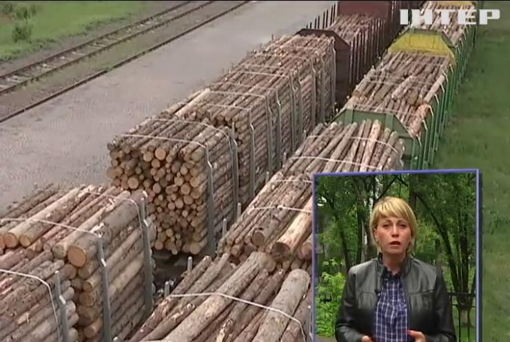 Ради кредита Кабмин разрешит экспорт леса