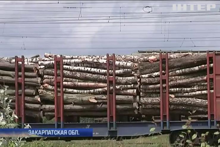 Лесхозы Закарпатья обвинили в работе на россиян