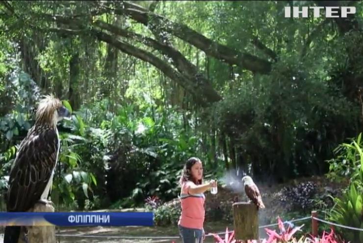 На Філіппінах намагаються врятувати унікальних орлів-мавпоїдів