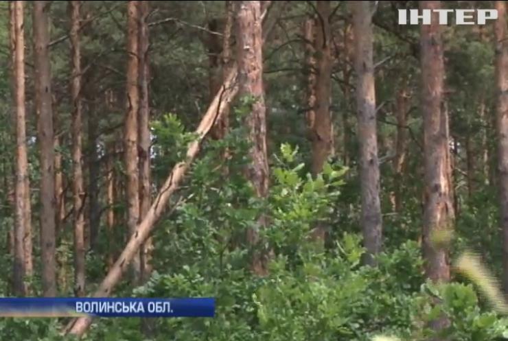 Короїд знищує ліси в Україні