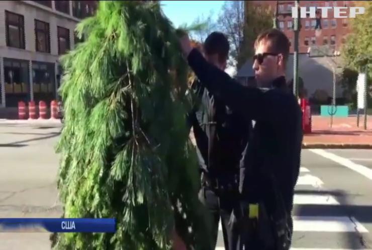 В США чоловік замаскувався під дерево та ходив дорогою
