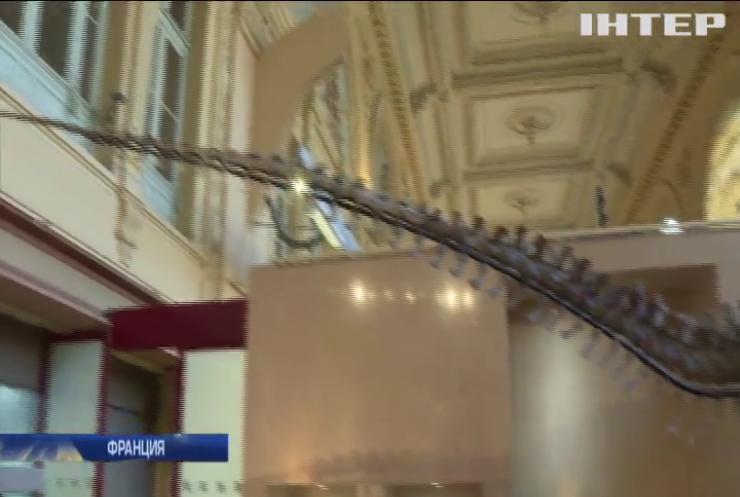 Во Франции на аукционе продали скелет динозавра за миллион евро